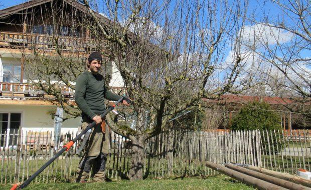 sebastian brandl steht vor ungepflegtem apfelbaum mit vielen wasserschoßern. In der hand hat er eine teleskopschere von gardena. Am Boden liegt eine holzleiter, im hintergrund ist ein gelbes Haus mit einem stakettenzaun davor.